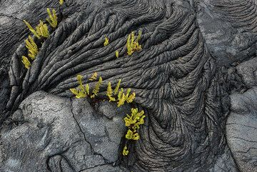 The ropy structures also provide suitable root holds for the ferns. (Photo: Tom Pfeiffer)