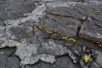 Lava surfaces (Photo: Tom Pfeiffer)