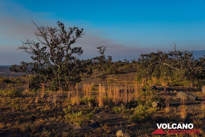 Grassland near the Steam vents (Photo: Tom Pfeiffer)