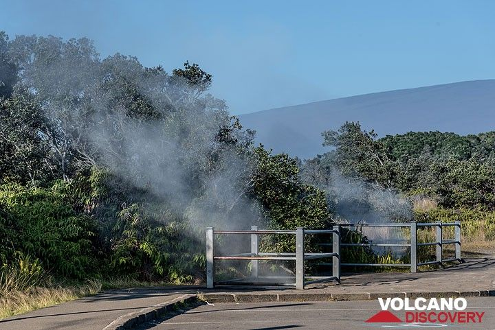 """The site of the """"Steam vents"""" on the inner caldera rim. (Photo: Tom Pfeiffer)"""