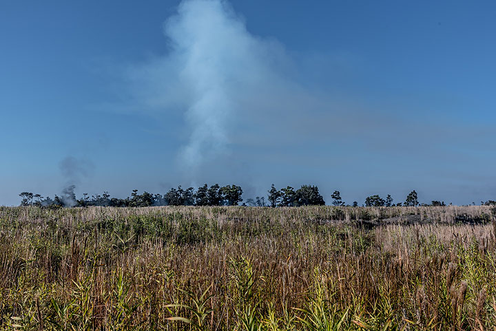 Fresh and scented grassland - gas plume from the lava lake in the background. (Photo: Tom Pfeiffer)