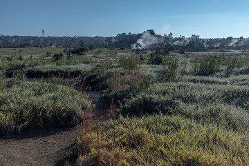 Area near Steam Vents (Photo: Tom Pfeiffer)