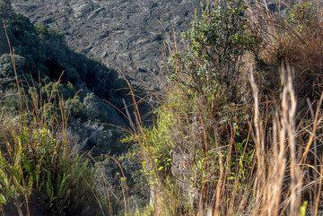 View down the caldera cliff (Photo: Tom Pfeiffer)
