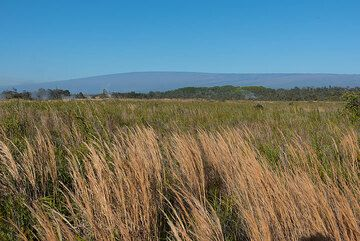 Grass meadow and Mauna Loa in background (Photo: Tom Pfeiffer)