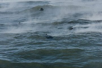 The hot seawater and floating lava pieces (Photo: Tom Pfeiffer)