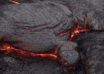 A lava turtle (Photo: Tom Pfeiffer)