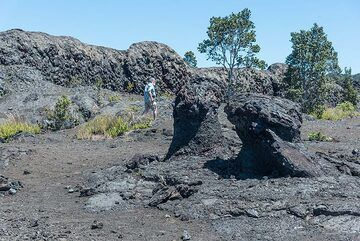 Lava trees: a flood of lava invaded the forest at the beginning of the eruption, coating the trunks of Ohia trees. As the lava drained away later on, the lava molds were left standing. (Photo: Tom Pfeiffer)
