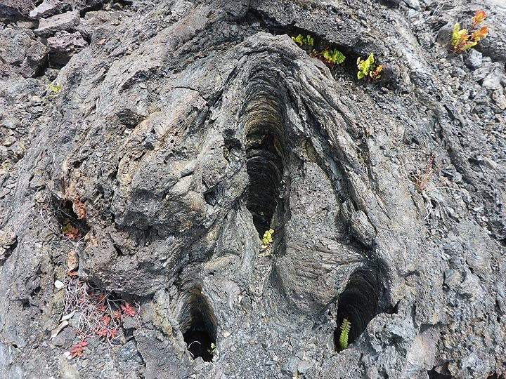 Day 2: Moisture in the wood of the tree trunk and gas bubbles in the lava are excellent insulation against complete incineration so that a perfect mold of the tree trunk is formed (Photo: Ingrid Smet)