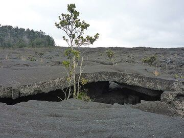 Day 2: Pahoehoe lava flows quickly form a thick crust which then forms a roof of the hollow lava tube that remains after the lava drained away (Photo: Ingrid Smet)