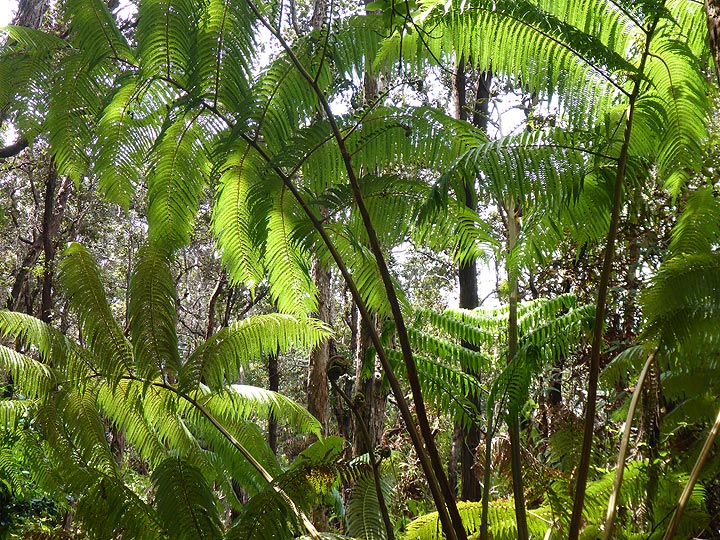 Day 3: (sword)Ferns are a common species of the tropical vegetation along forest trails (Photo: Ingrid Smet)