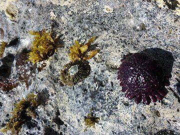 Day 4: Marine locals of Green Sand Beach (Photo: Ingrid Smet)
