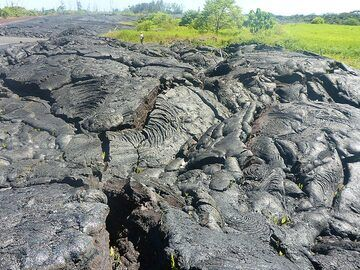 Day 5: The vegetation right next to the 2015 lava flow survived surprisingly well (Photo: Ingrid Smet)
