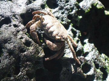 Day 5: Local resident of the hydrothermal semi-saline spring (Photo: Ingrid Smet)