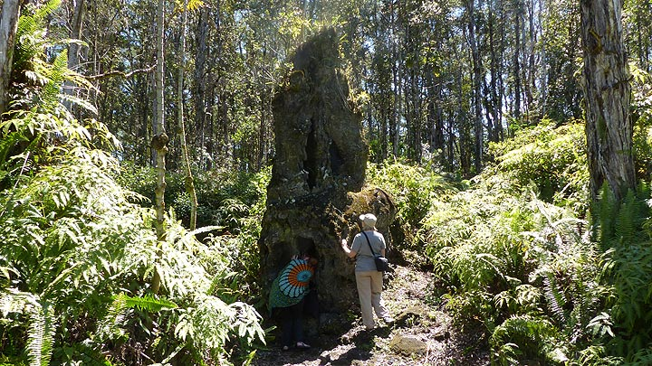 Day 5: One of the larger ´lava trees´ found in the park (Photo: Ingrid Smet)
