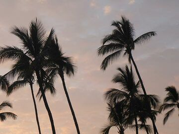 Extension day 1: Palm trees against a sunset sky (Photo: Ingrid Smet)