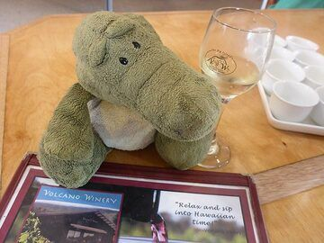 Extension day 1: Our volcano adventures mascot trying out the unique wines of the Volcano Winery (Photo: Ingrid Smet)