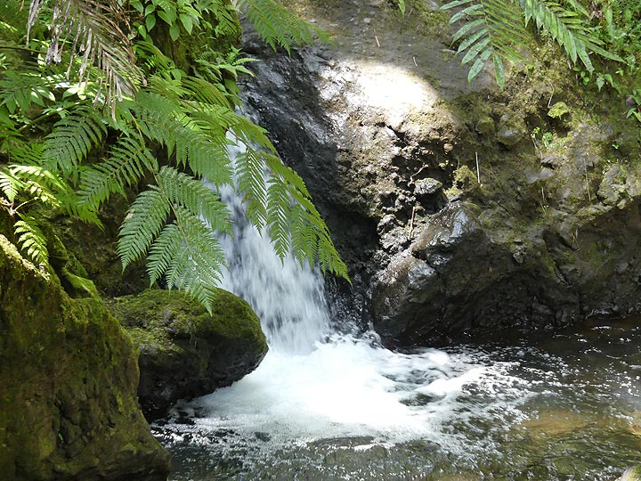 Extension day 4:Waterfalls in the Hawaii Tropical Botanical Garden (Photo: Ingrid Smet)