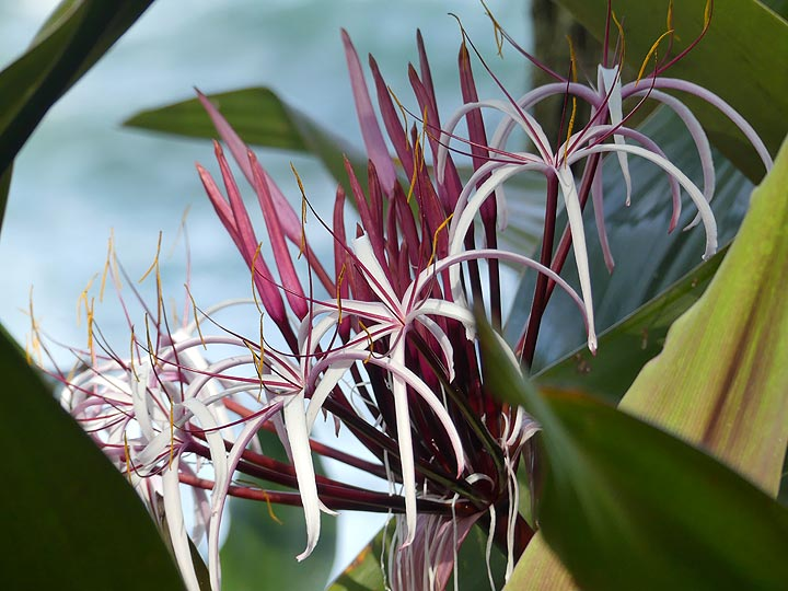 Extension day 4: Afternoon visit of the Hawaii Tropical Botanical Garden (Photo: Ingrid Smet)