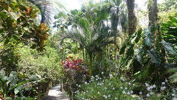 Extension day 4: Afternoon visit of the Hawaii Tropical Botanical Garden (Photo: Steven Van den Berge / Lana Van Heghe)