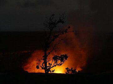 Silhouette of an ohia lehua tree against the yellow-orange-red glow from the Halema'uma'u lava lake (Photo: Ingrid Smet)