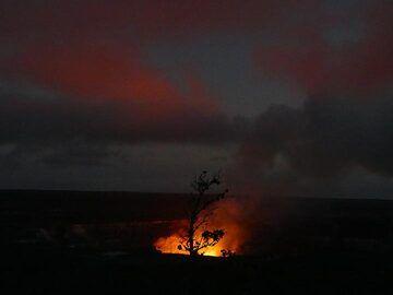 Silhouette of an ohia lehua tree against the red glow above Halema'uma'u crater (Photo: Ingrid Smet)