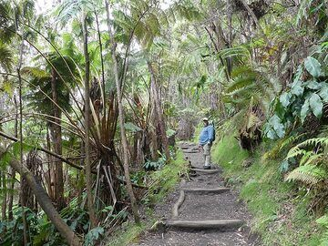 The way out of the Kilauea Iki crater is again through a lush rainforest of fern trees (Photo: Ingrid Smet)