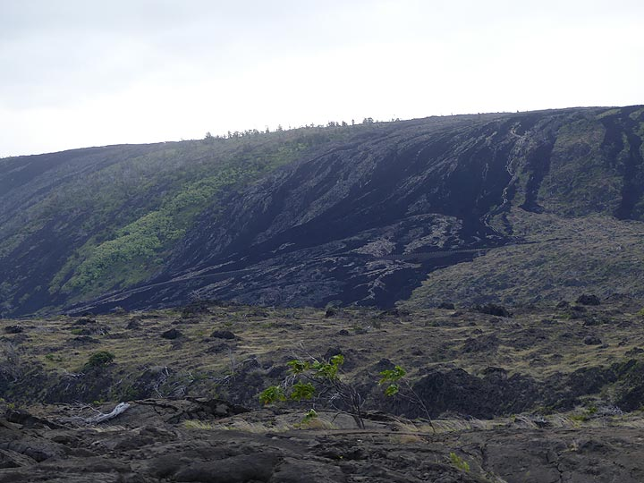 When lava flows travel towards the ocean and come down the pali they do so taking the lower grounds, sometimes leaving behind 'kipukas' patches of older forests that are slight elevated (Photo: Ingrid Smet)