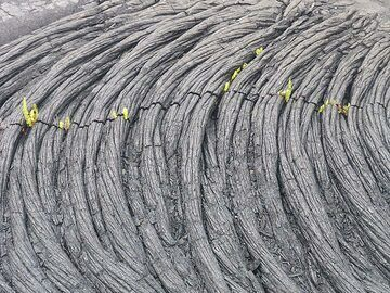 The first plants to appear inside cooling cracks of new lava flows are ferns (Photo: Ingrid Smet)