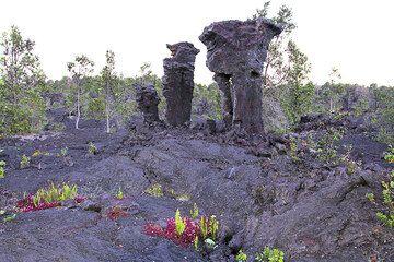 Hawaii042013rdIMG3753.jpg (Photo: Yashmin Chebli)