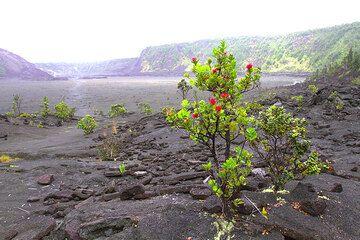 Hawaii042013rdIMG3972.jpg (Photo: Yashmin Chebli)