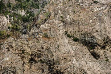Near vertical cliffs of the eastern sciara walls of Batu Tara. In the tropical climate, trees grow on the narrowest of ledges available. (Photo: Tom Pfeiffer)