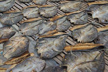 Drying fish. (Photo: Tom Pfeiffer)