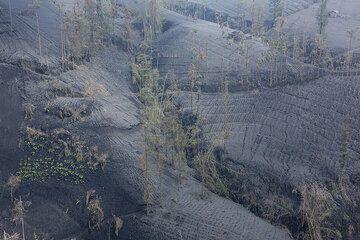 Ngadirejo Dorf im Distrikt Probolinggo, Ost-Java, liegt nahe der Tengger-Kaldera. Es ist eines der Gebiete, die am meisten unter Asche fallen während des Bromo jüngsten Ausbruch gelitten. Bis 30 cm von dichten, Esche schwarz angesammelt im Bereich, auf Feldern, Straßen und Häuser, buchstäblich alles zu begraben. Die Dicke Decke Asche hat getötet fast alle Vegetation, Kulturen zerstört und beschädigte Häuser, Stromleitungen und Wasserversorgung. Bereich wurde Unfallzone indonesischen Behörden ausgerufen. Trotzdem haben nur wenige Menschen tatsächlich ihre Häuser verlassen. Menschen im Dorf sind optimistisch und fest entschlossen, die anhaltende Krise widerstehen und weitermachen mit ihr Leben so gut wie möglich. (Photo: Tom Pfeiffer)