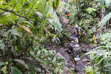 Trail in rainforest towards Dukono (Photo: Tom Pfeiffer)