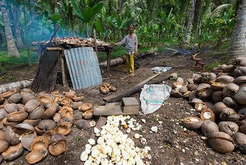 Copra (dried coconut meat) is used to obtain coconut oil. It is an important regional produce. Here, the shells are removed, the meat is broken up and dried over slow fire. (Photo: Tom Pfeiffer)