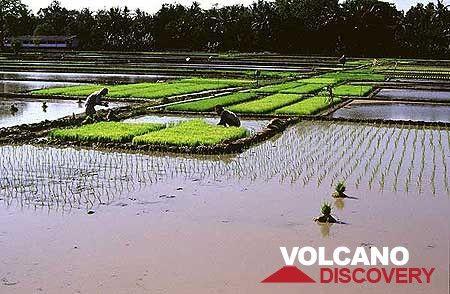 Rice terraces (Photo: Tom Pfeiffer)