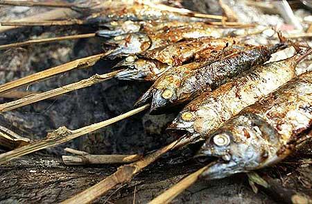 Grilling fish (Krakatau camp) (Photo: Tom Pfeiffer)