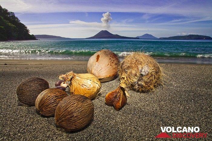 Nuts and the erupting volcano Anak Krakatau (Photo: Tobias Schorr)