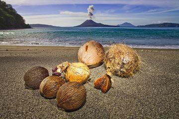 A selection of photos taken by Tobias Schorr (link to his website) during the Krakatau to Bali tour in July 2009. (Photo: Tobias Schorr)