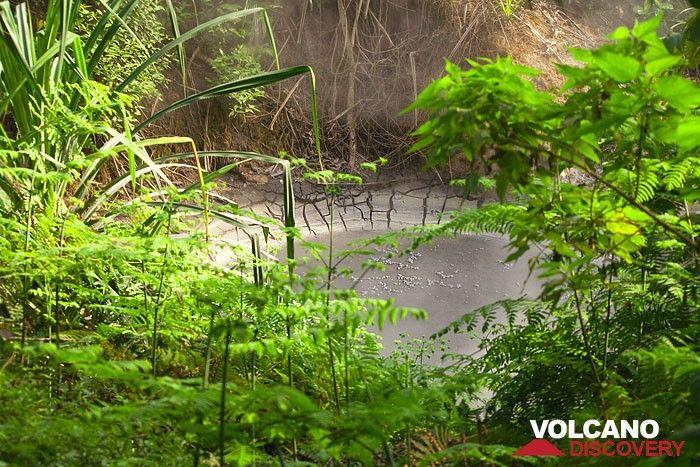 Boiling mud pool at Cipanas (Photo: Tobias Schorr)