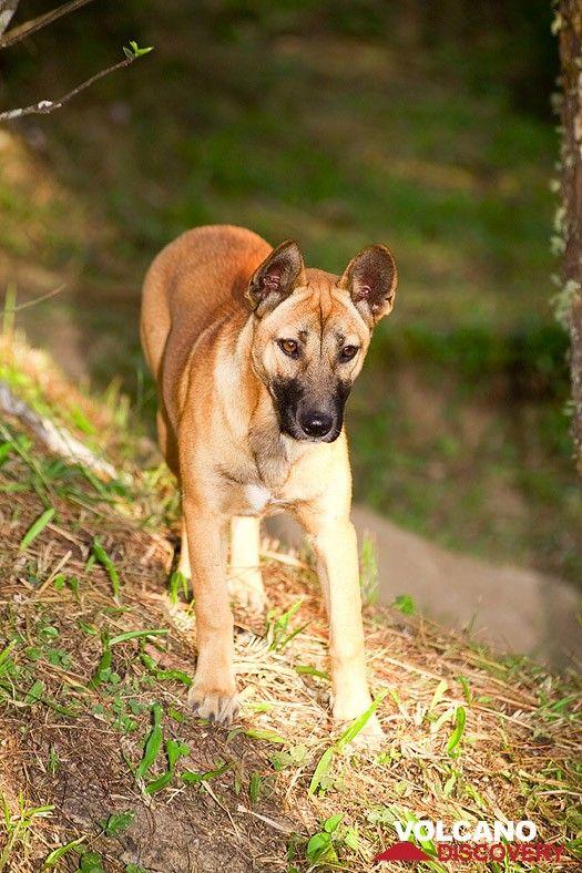 A nice dog at Cipanas (Photo: Tobias Schorr)