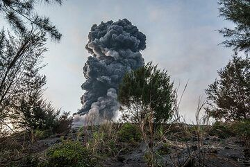 View towards the summit crater from the edge of the forest on Anak Krakatau (Photo: Tom Pfeiffer)