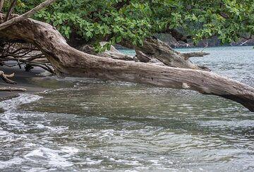Fallen tree trunks on the beach of Rakata. (Photo: Tom Pfeiffer)