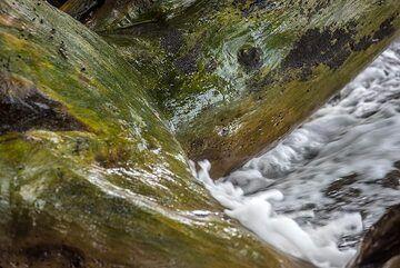 Water polished wood. (Photo: Tom Pfeiffer)