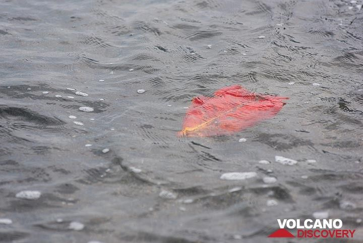 Floating red leaf (Photo: Tom Pfeiffer)