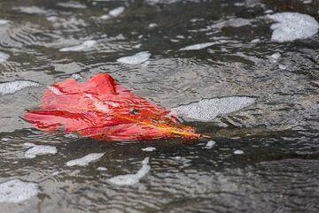Red leaf (Photo: Tom Pfeiffer)