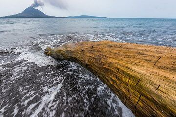 Worms have drilled parallel tubes into the old wood of this tree trunk on the beach. (Photo: Tom Pfeiffer)