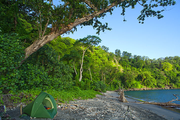 Tropical forest at the beach of Rakata (Photo: Tom Pfeiffer)