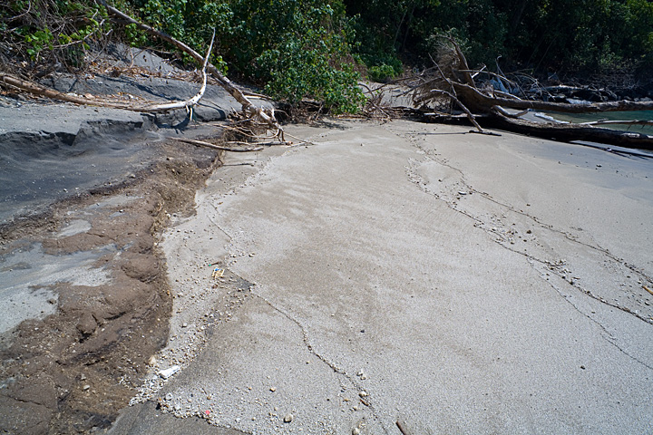 The old soil where the trees grew is visible here. Probably, it formed by deposits of collapse of the Rakata island after the 1883 eruption. The sediment platform it belongs to is now being eroded by wave action. (Photo: Tom Pfeiffer)