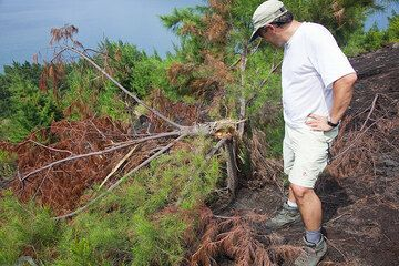 Jorge inspecting the damage to the knocked-down tree. Interestingly, it was not burnt, showing that the block hitting it was not very hot. (Photo: Tom Pfeiffer)